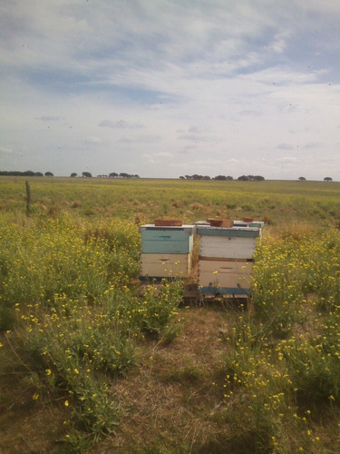 miel pura de abejas 100% natural