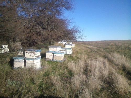 miel pura de abejas 100% natural  pack x 12 kg. envasada