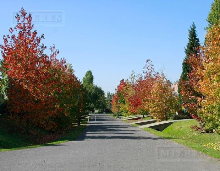 mieres propiedades- terreno de 559 mts en pilar del este san ramon