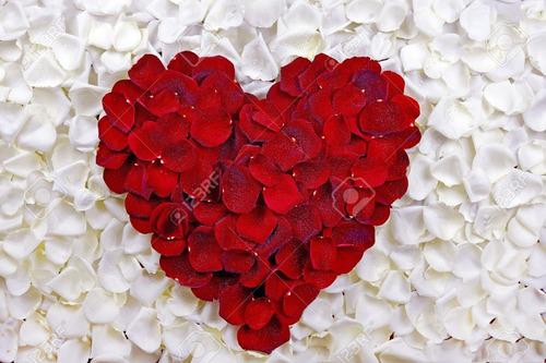 mil pétalas de rosas artificiais mistas vermelho e branco
