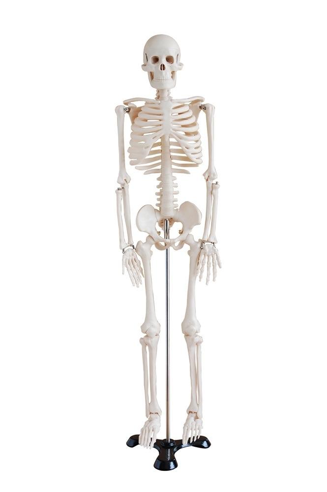 Mini Esqueleto Humano De Plastico En Base De Metal 85 Cms ...