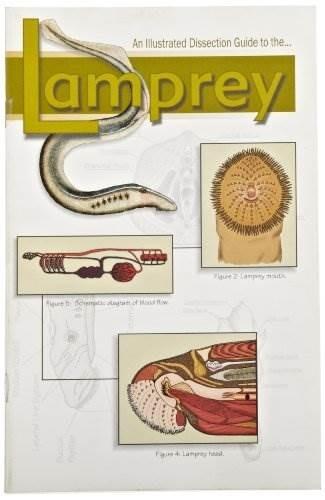 Mini-guía Frey Scientific 532248 Para Disección De Lamprea ...