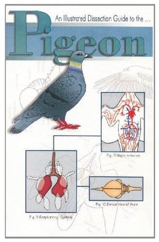 Mini-guía Frey Scientific 597030 Para Disección De Palomas ...