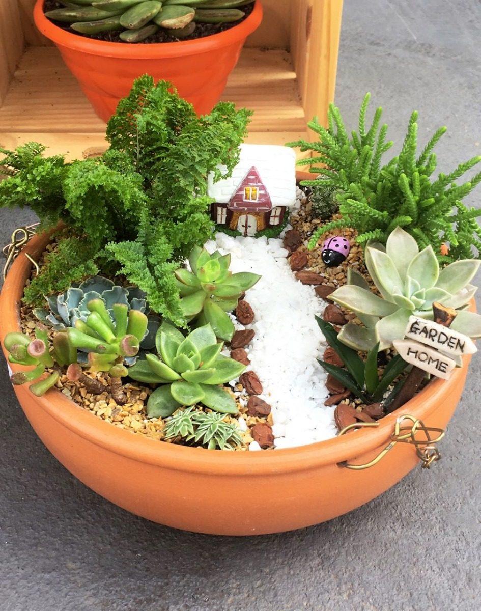 Mini Jardim Suculentas E Cactos Em Vasos E Terrario Curitib