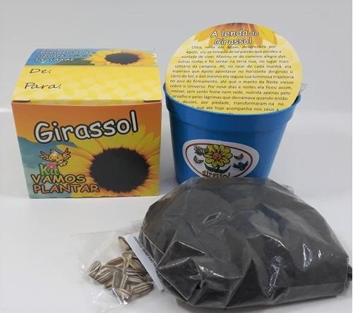 mini kit vamos plantar girassol - combo 15 unidades