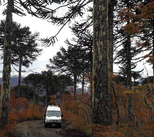 minibuses traslados paseos viajes . cel +56989229141