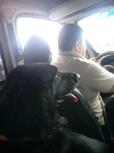 minifletes,viajes c/mascotas,costa atlantica ,a todo el pais