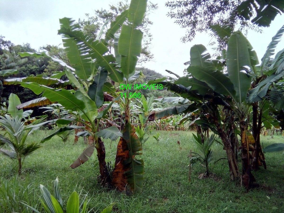 miracatu / fundos para rio / rico em plantação / só 250.000 - 04903 - 34358579