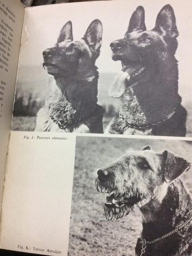 mis perros - entrenamiento - ed. gustavo gili - 1972
