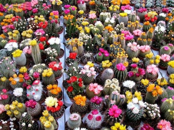 Amateur digerir semillas de cactus