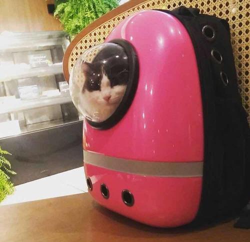 mochila para gato astronauta