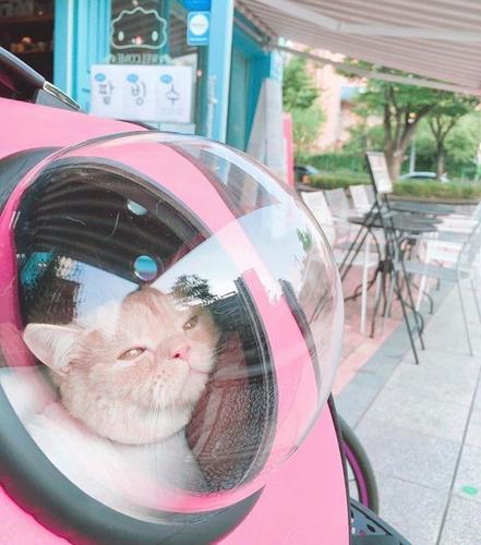 mochila para gatos o perros transportadora rígida burbuja