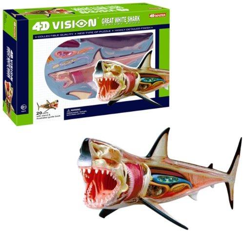 Modelo 4d Vision Gran Tiburón Blanco Anatomía - $ 46.990 en Mercado ...