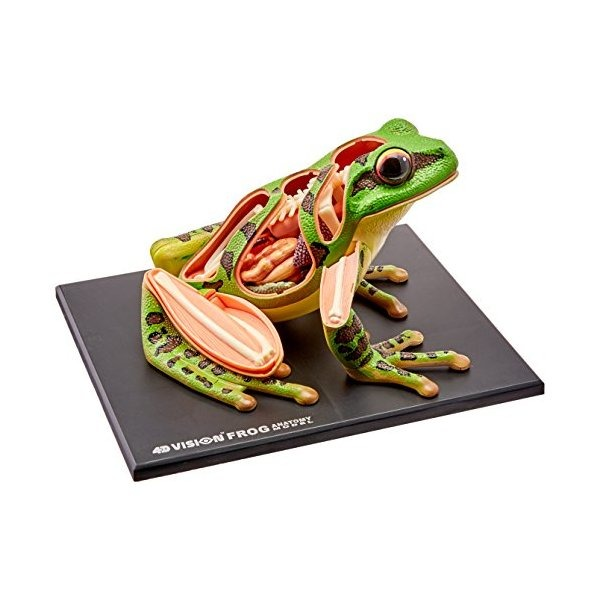 Modelo 4d Visión Rana Anatomía - $ 1,827.77 en Mercado Libre
