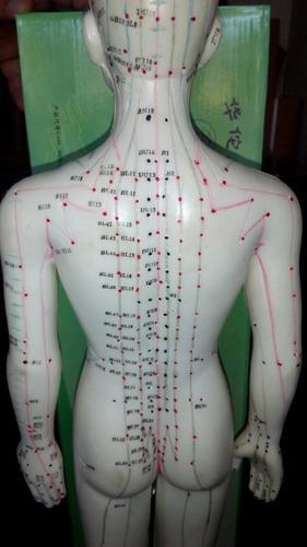 modelo acupuntura 60cm con puntos y canales incluye base