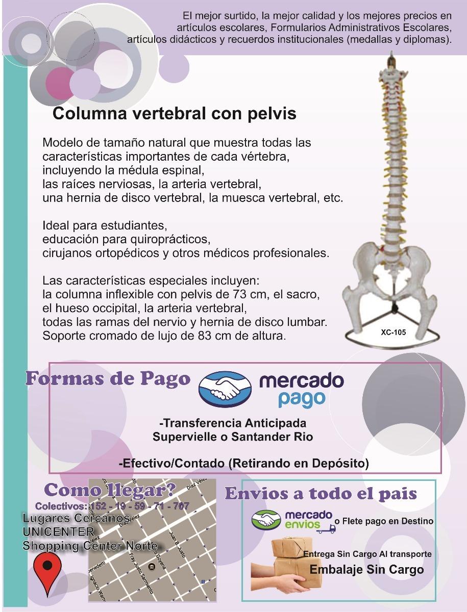Modelo Anatomia - Columna Vertebral Con Pelvis - $ 3.800,00 en ...