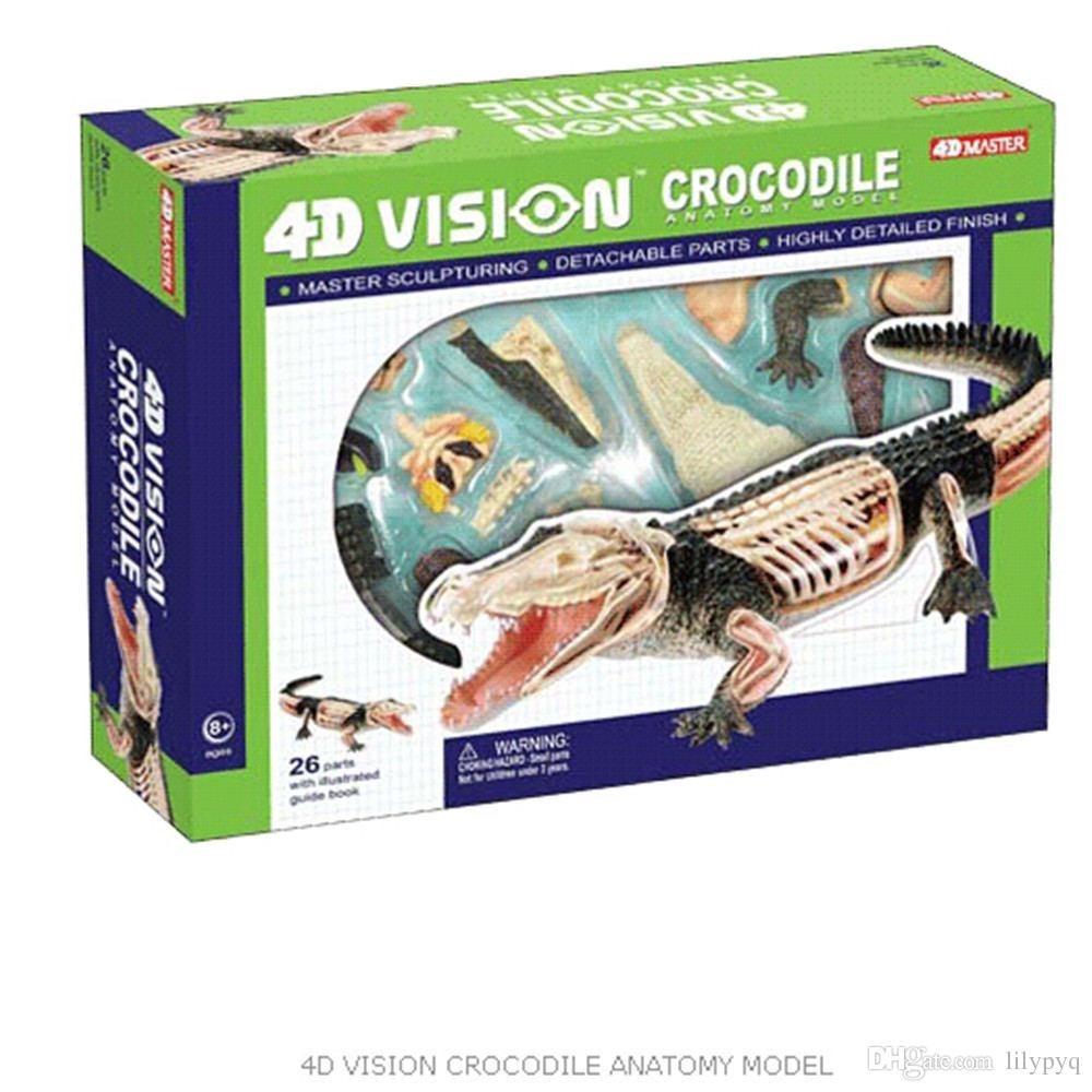 Modelo Anatomico 4d El Cocodrilo Importado Anatomia - $ 179.900 en ...