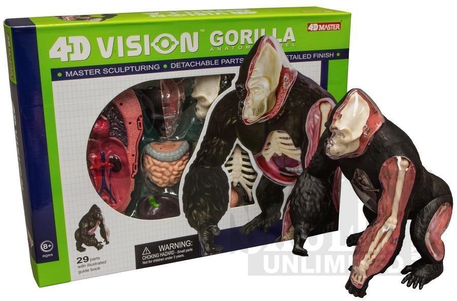 Modelo Anatomico 4d El Gorila Increible Importado Anatomia ...