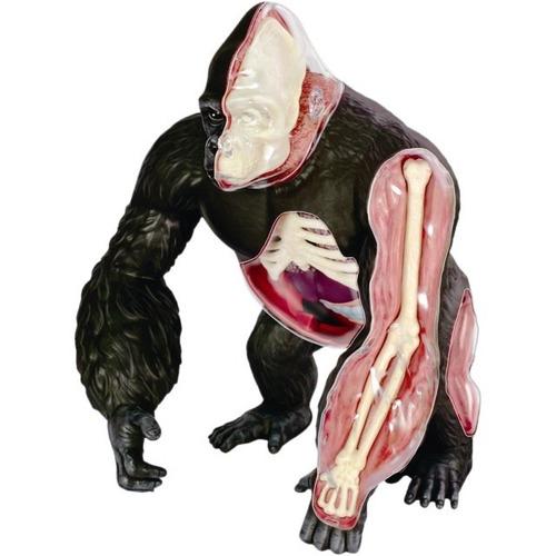 modelo anatomico 4d el gorila increible importado anatomia