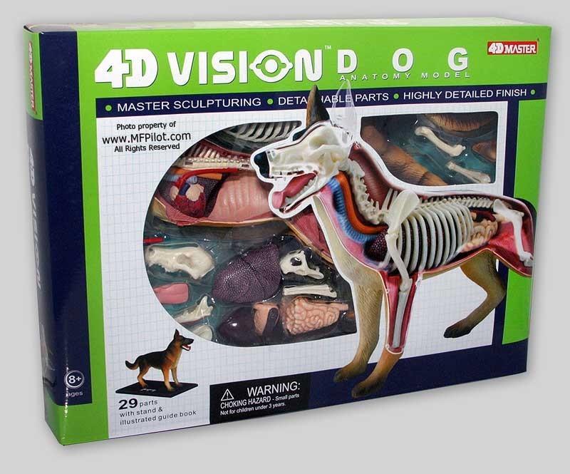 Modelo Anatomico 4d El Perro Increible Importado Anatomia ...