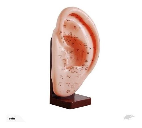 modelo anatomico acupuntura con meridianos - varios modelos