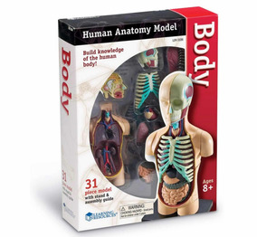 Realista Modelo Armable Anatómico B4u Cuerpo Humano 4jc35ARLq
