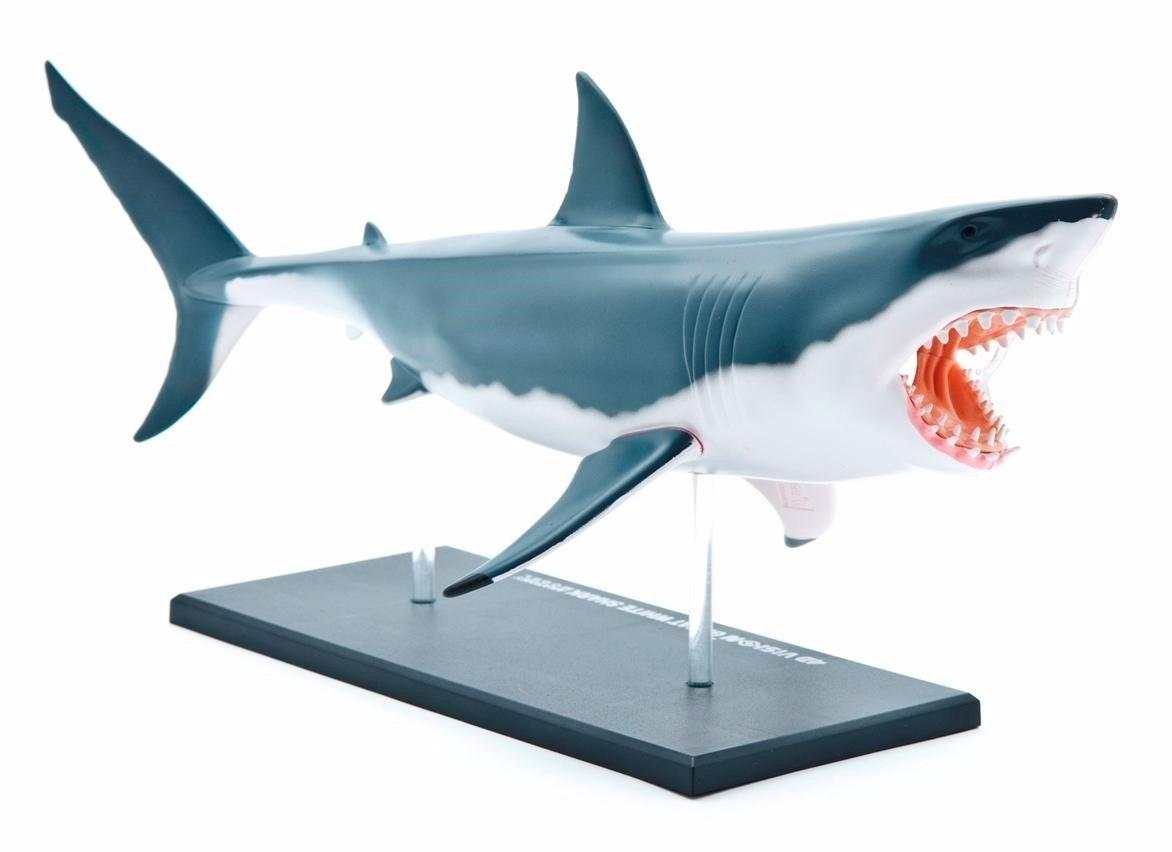 Dorable Tiburón Diagrama Anatomía Interna Viñeta - Anatomía de Las ...