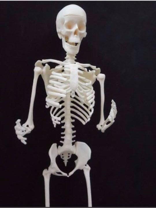 Modelo Anatómico Esqueleto Humano. Totalmente Movible 30 Cms ...