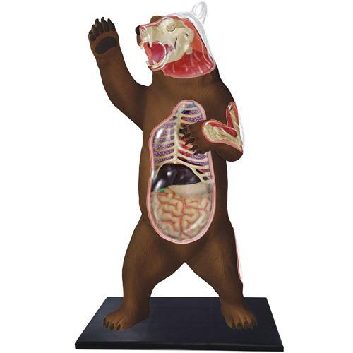 Modelo De Anatomía De Oso Polar - $ 190.111 en Mercado Libre