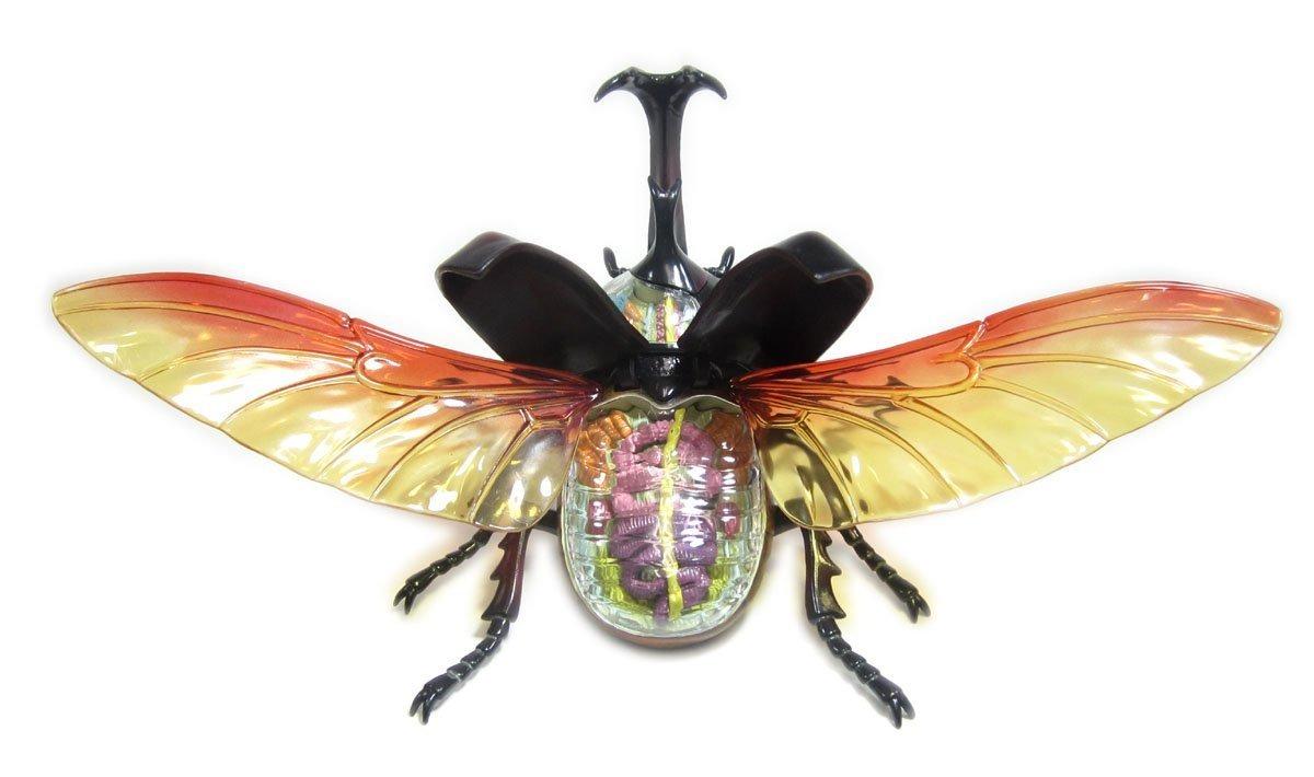 Modelo De Anatomía Del Escarabajo No.06 Rompecabezas Trid ...