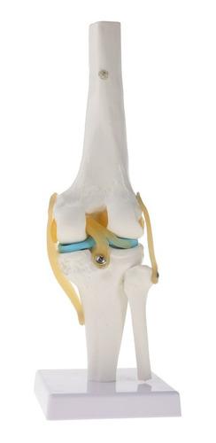 modelo de articulación de la rodilla