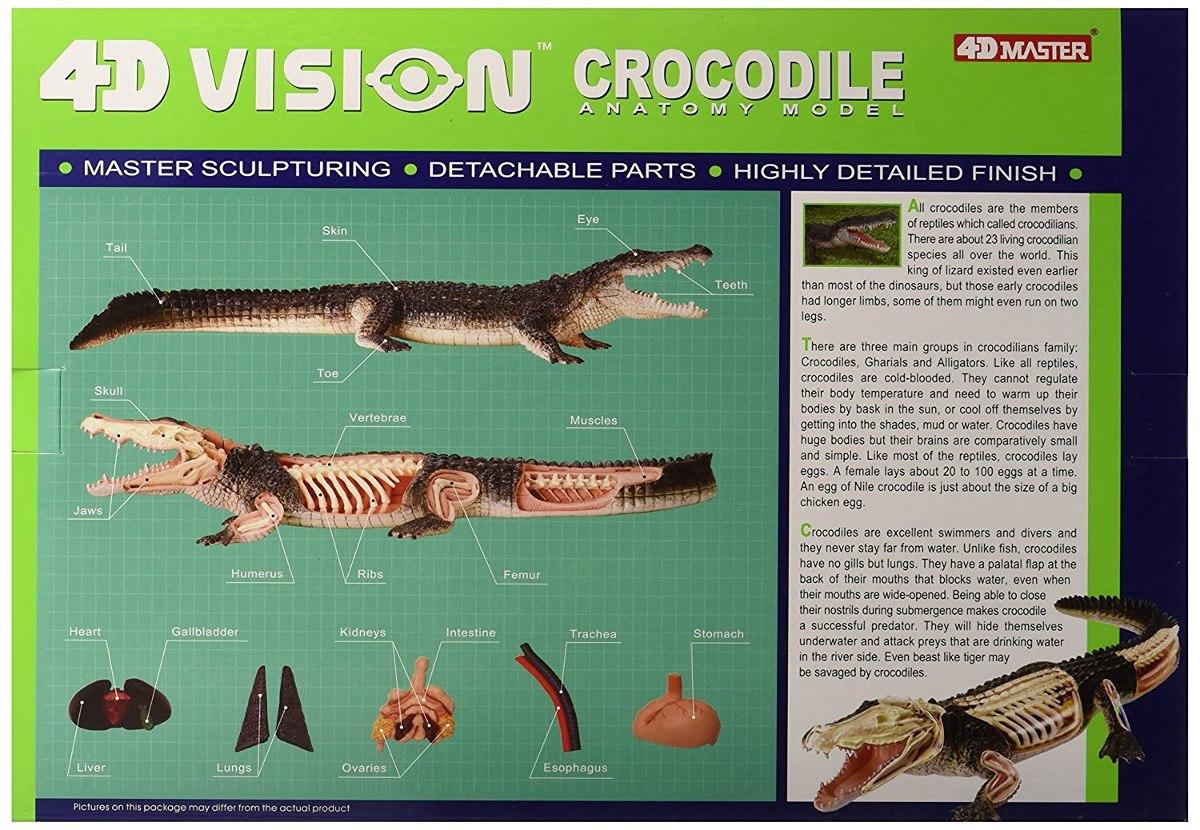 Modelo Famemaster 4d Visión Cocodrilo Anatomía - $ 1,811.61 en ...
