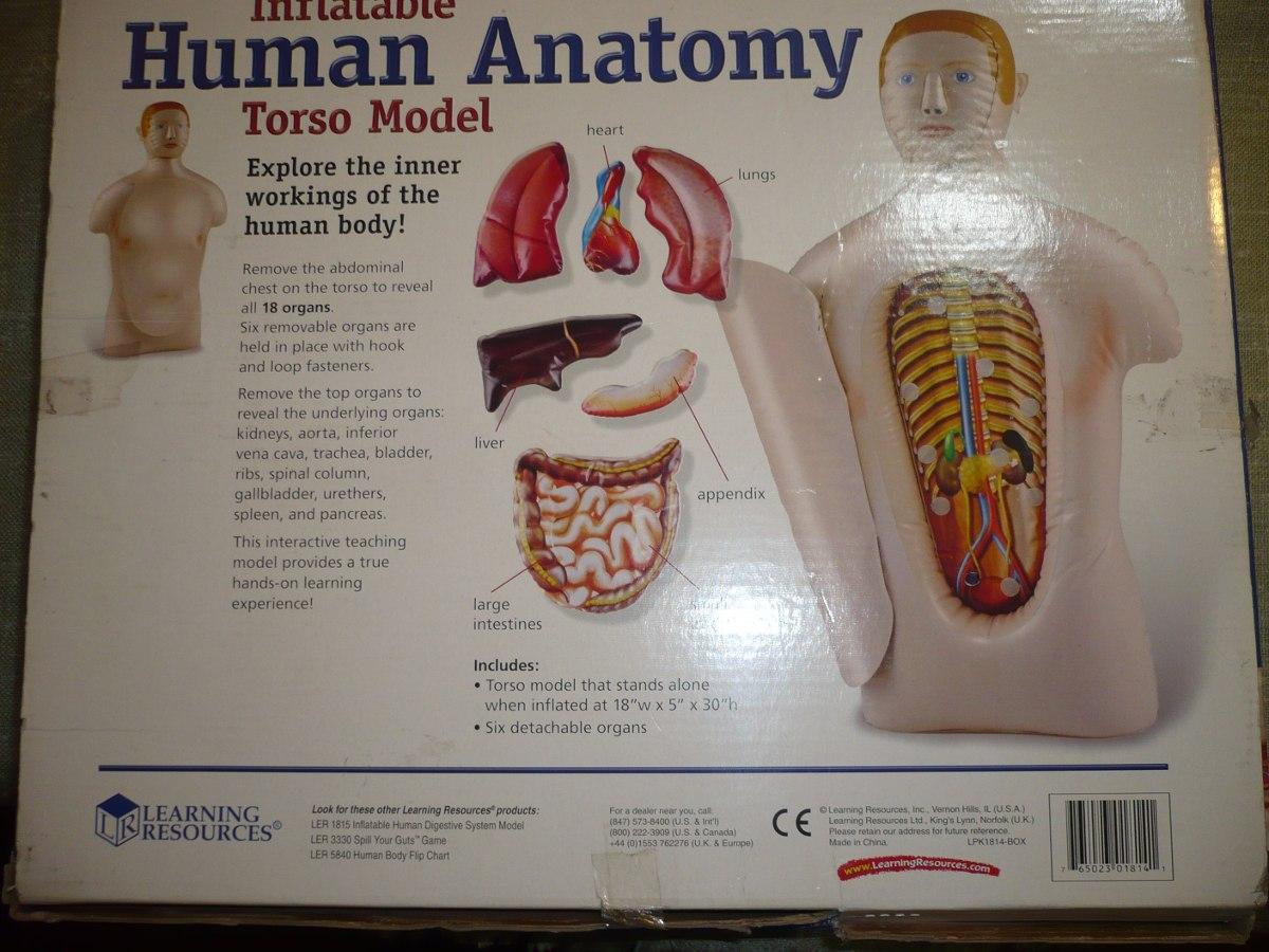 Modelo Inflable De Anatomía Del Cuerpo Humano - Torso - $ 18.000 en ...