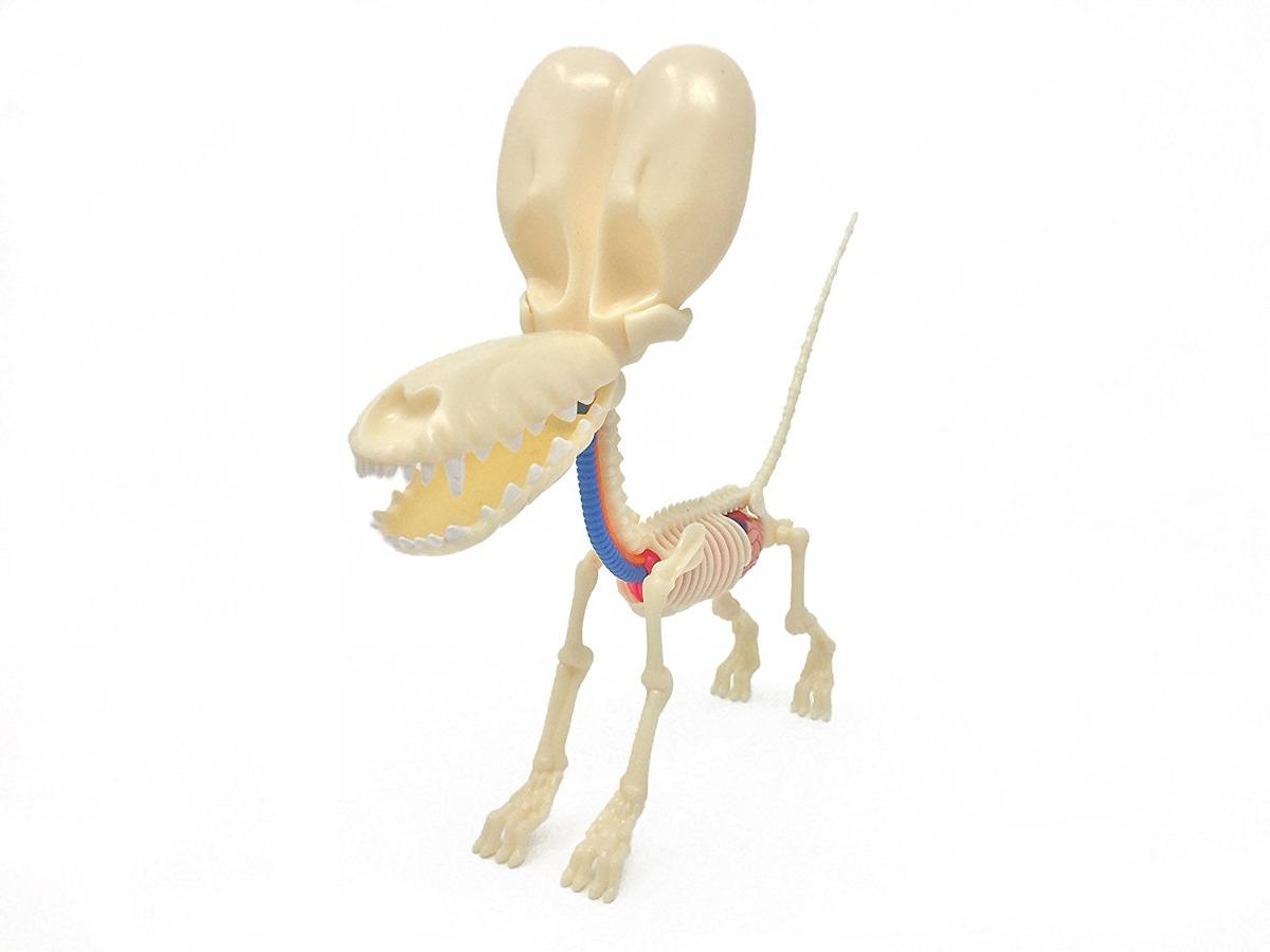Modelo Jason Freeny Púrpura Globo Humor De Perros Anatomía ...