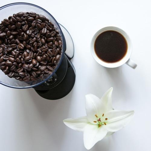 molinillo de cafe mh23 oster 18 niveles