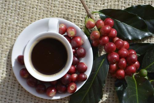 molino eléctrico de café & café gourmet en grano