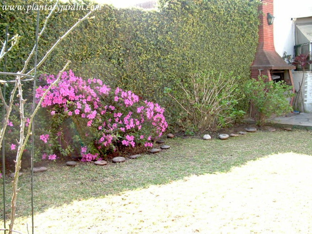 Moneda enredadera muro verde jard n vertical planta - Muros de jardin ...