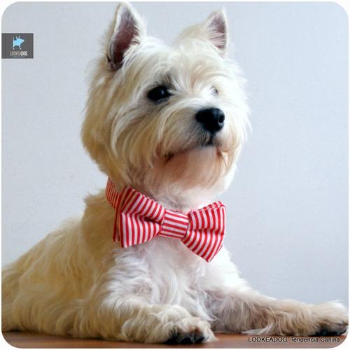 moños pajaritas ! ropa accesorios perros gato mascotas canes
