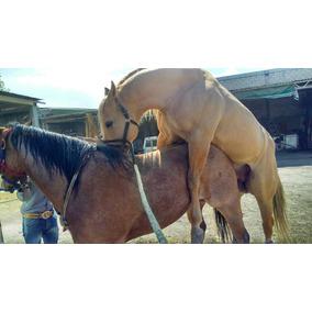 Cuarto Princesa Sofia - Todo para Equinos en Mercado Libre México