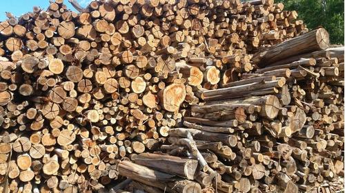 montes euca y pino necesitamos