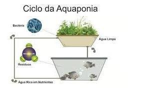 monto aquaponia e hidroponia residencial