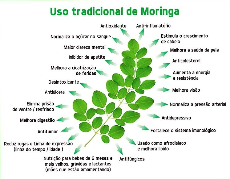 Moringa Oleifera- 01 Kg Sementes + 100 Gramas De