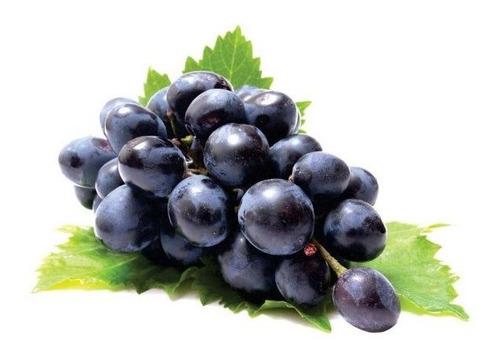 muda de uva brs vitória enxertada
