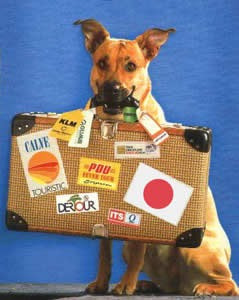 mudanzas - traslados de mascotas y personas - a todo el pais