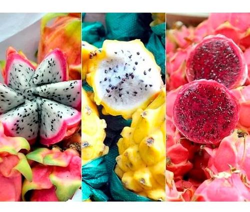 mudas de pitaya amarela, rosa, roxa e cerrado