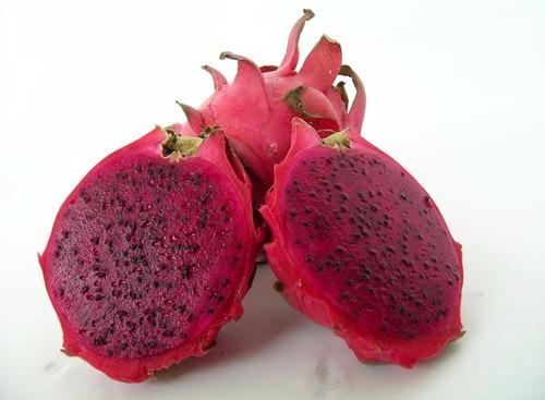 mudas de pitaya com polpa vermelha (delícia) sem raiz