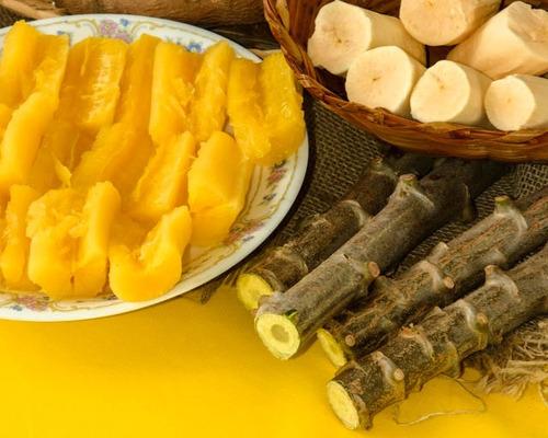 mudas manivas de mandioca amarela deliciosa - rara