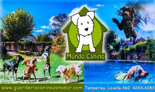 mundo canino guarderías en libertad sin caniles