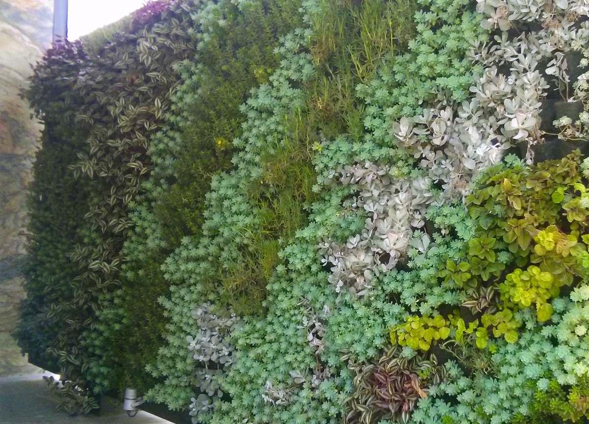 Muros verdes naturales en mercado libre for Muros verdes naturales