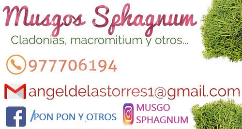 musgo sphagnum, biofritas,cladonias,macromitium,kokedamas